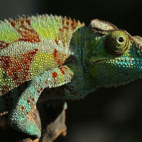 Be a Goal Crushing Chameleon