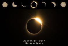 Solar Eclipse collage.jpg