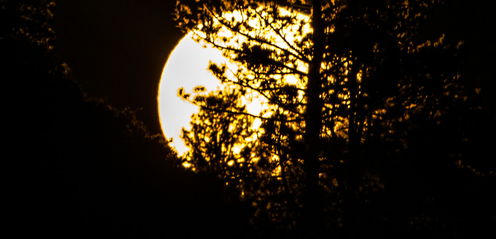 Supermoon though a Tree 2