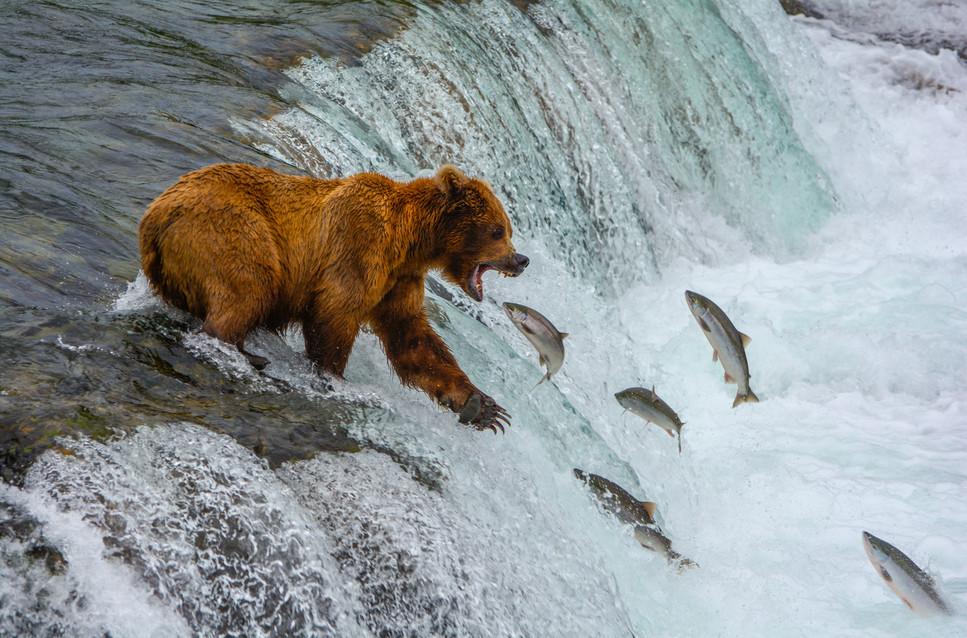 Salmon Buffet