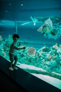 Aquarium with the Thurmans-41.JPG