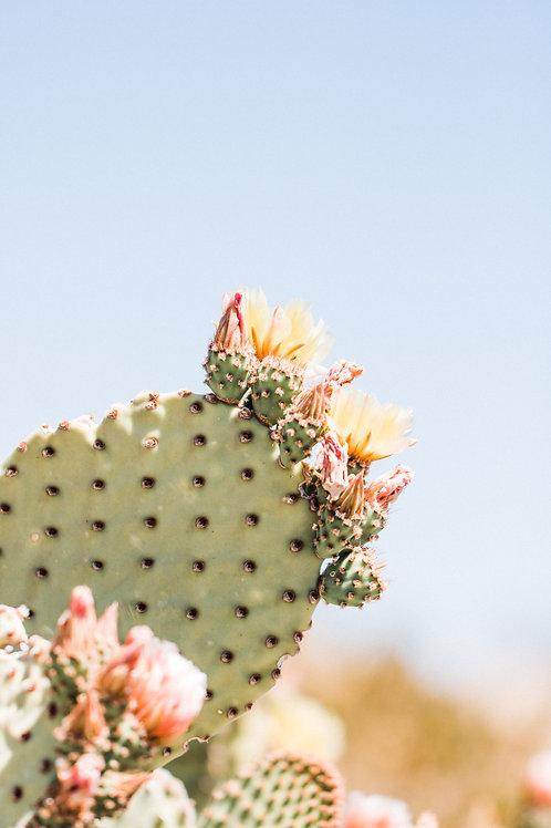 Big Bend Cactus 2