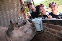 Rhino orphan interaction