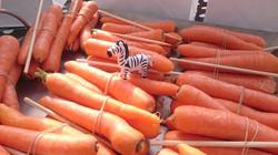 Zebra goodie bags