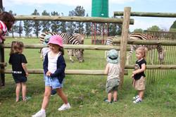 Meeting the zebras