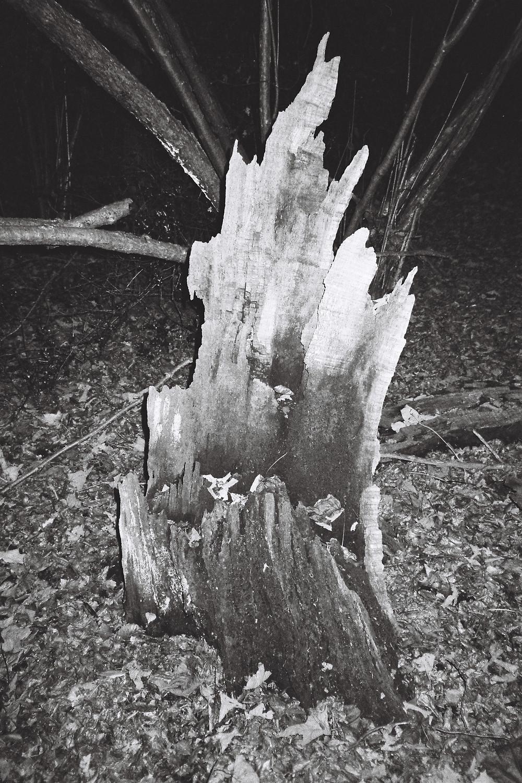 www.blackarrowphoto.com