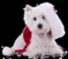 Weihnachtswestie1_Shutterstock.png