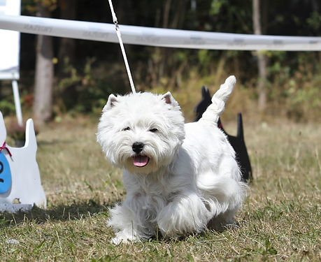 dog-paparazzi_Dog%20Paparazzi%20-%20KFT-