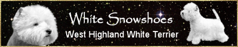 Banner_White Snowshoes.png