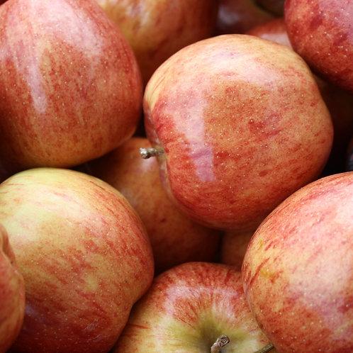 תפוח עץ פינק ליידי - קילו