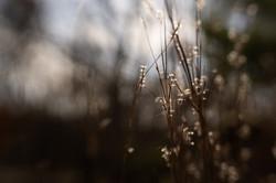 nov-11-glowing-seeds