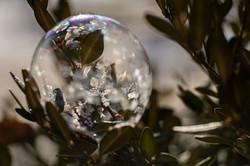 jan-20-winter-bubble-4-velvet-85
