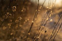 jan-23-morning-sparkles-velvet