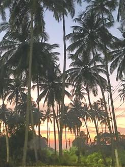 Goa palm trees retreat.jpg