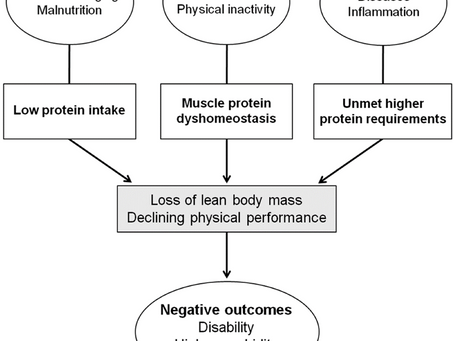 Older Adults and Protein Intake: Prioritizing Muscle Health