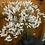 Thumbnail: Black Matt Vase with Dried Bunch