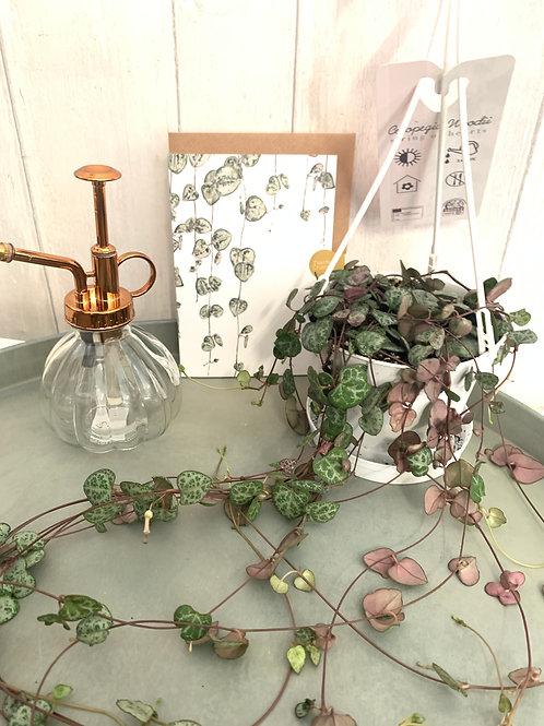 Plant Lover Gift Set