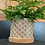 Thumbnail: Adiantum Fern with Terracotta Pot