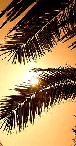 trees-tropical-leaves-sepia-lockscreen-w