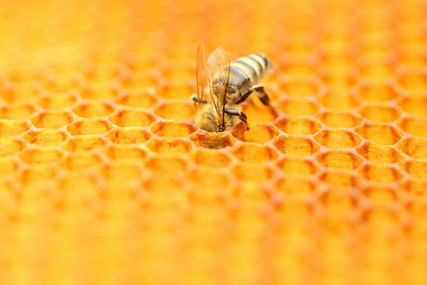 bee with comb.jpg