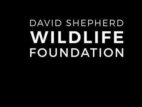David Shepherd Wildlife Foundation Wildlife (DSWF) Artist of the Year Event 2020