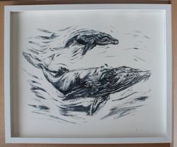 Humpback whale screenprint