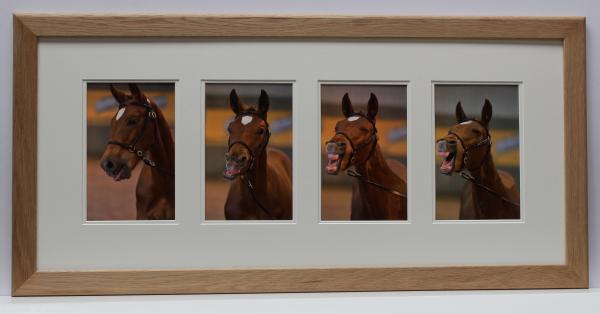 Horse yawing www.fellowsframing.co.uk