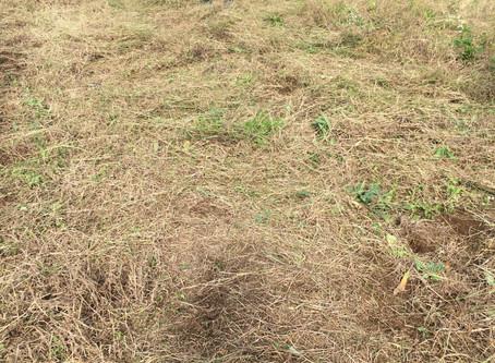 ひさしぶりの畑作業