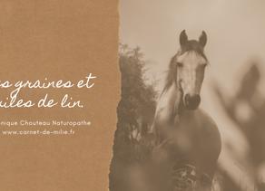 Les graines et huiles de lin pour les chevaux, par Véronique Chouteau Naturopathe