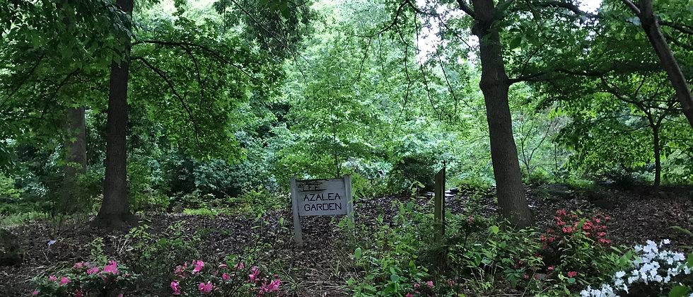 National Arboretum,Washington DC