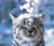 Cat January Event.jpg