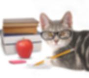 Event 9 - September Cat School Theme.jpg