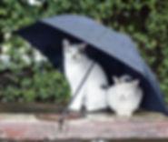 Cats under Umbrella April.jpg