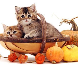 Event 10 - Kittens in basket with pumpki