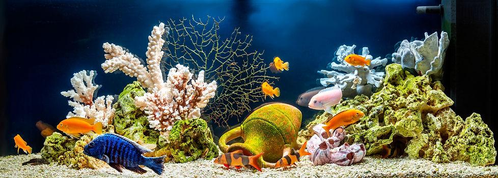 Freshwater Aquascape v2.jpg