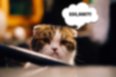 Websites for Writers - Grumpy Cat.png