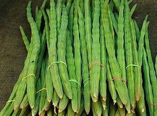 nurserylive-drumsticks-moringa-oleifera-