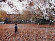 Zoom (Fall)