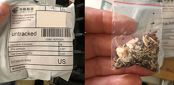 seeds_from_china.jpg