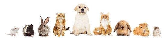 Tierärztin Laura Rebuzzi! Ich nehme mir viel Zeit für die Prävention von Krankheiten Ihrer Lieblinge. Ich biete Osteopathie für Hunde, Katzen und Pferden an. Rasche Diagnostik, Alterntive Behandlungsmethoden und Durchführung sämtlicher notwendiger Operationen im eigenen OP-Saal.