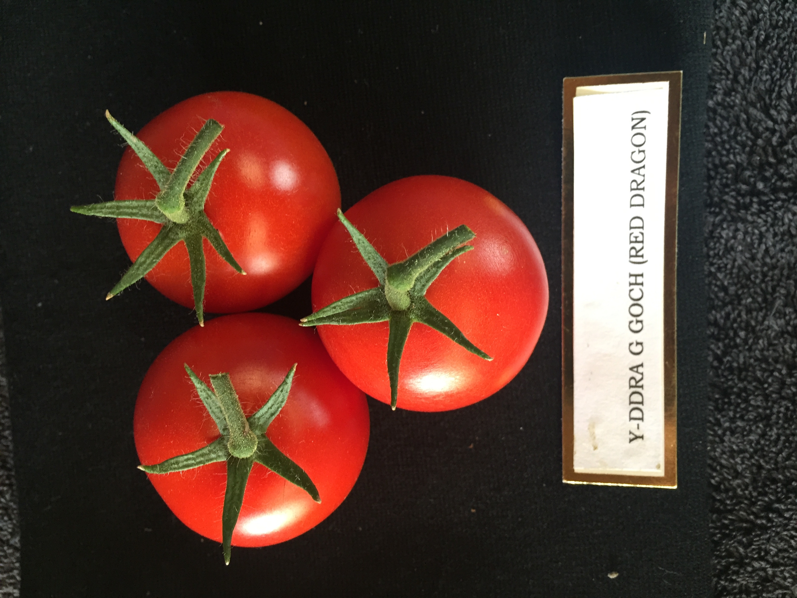 1st Prize Tomatoes, three medium