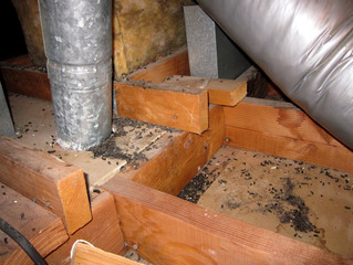 insulation that repels rodents