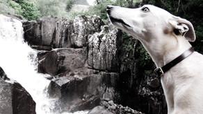 Whooshin' Bracklinn Falls, Callander