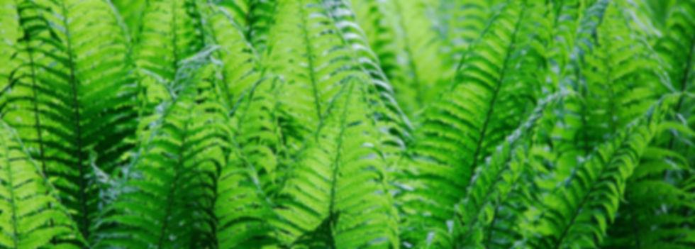 leaf-3319789_edited.jpg