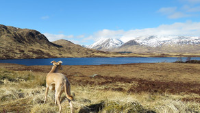 Lochan na h-Achlaise: the ABOUT page shot