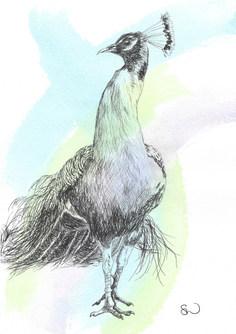 Tartan peacock