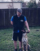 well trained dog in the woodlands. woodlands dog training