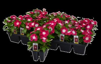 Flat (32-48 plants)