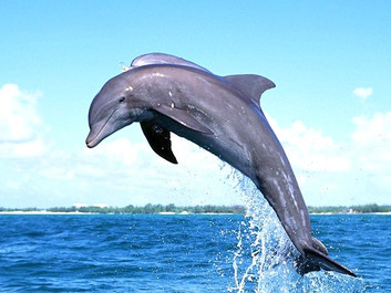 Dolphins _ Cavo Yachting