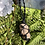 Thumbnail: Petrified Wood Macrame Necklace